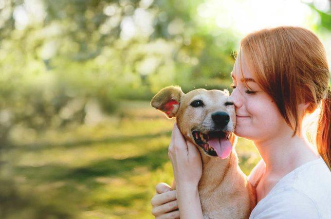Deciding on Pet Care Pet Insurance coverage