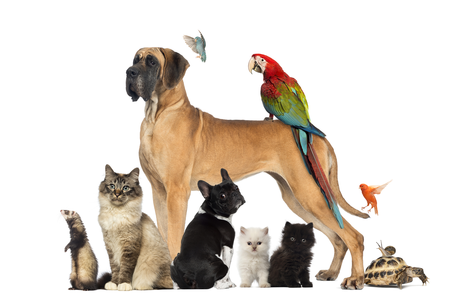 Get a Sainsburys Pet Insurance coverage Coverage – You Will Be Glad You Did