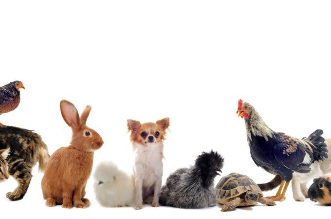 Pet Insurance coverage – three Myths Surrounding Pet Insurance coverage
