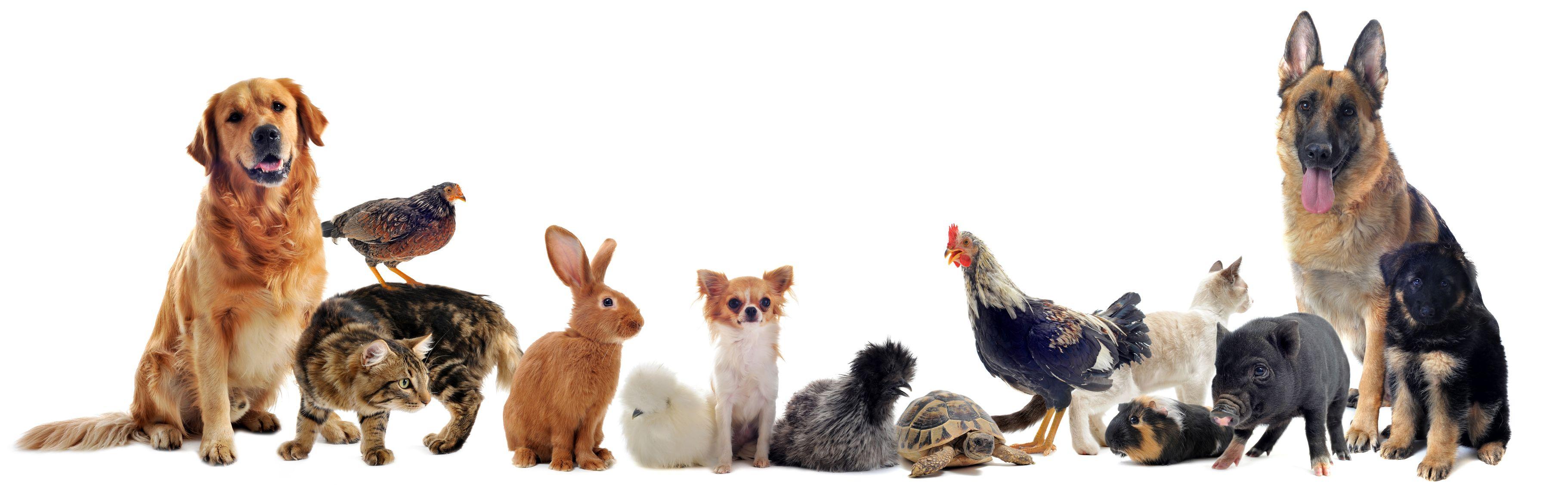 Pet Insurance - 3 Myths Surrounding Pet Insurance
