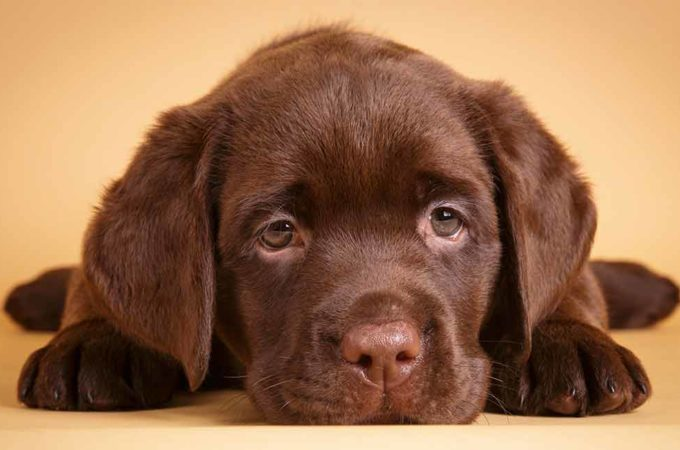 Pet Owners: 3 Things You Should Never Forget To Do